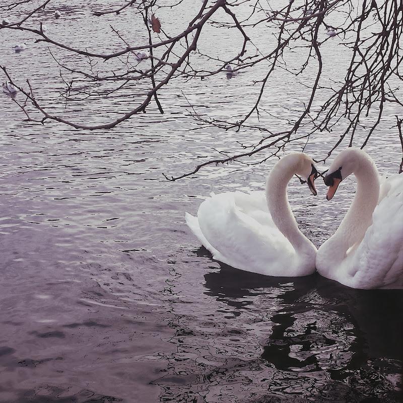 "Romantici ""Riflessi""  di alessia.sgroi"