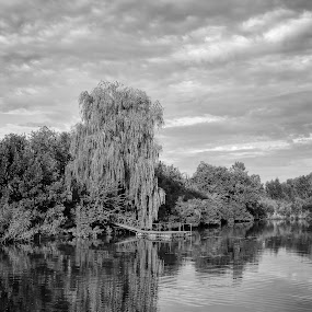 Reflection by Dmitriy Yanushevichus - Black & White Landscapes ( clouds, water, reflection, black and white, forest, lake, willow, landscape, dock, sky, tree, ripple, pier, cloudy, river )