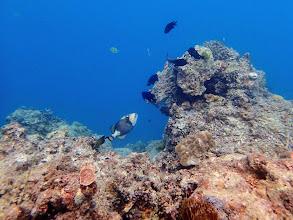Photo: Miniloc Island Resort reef, Palawan, Philippines