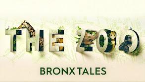The Zoo: Bronx Tales thumbnail