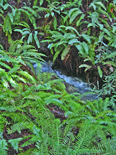 Photo: Fern Lined Stream