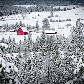 Red Barn Winter Wonderland by Scott Wood - Buildings & Architecture Other Exteriors ( farm, field, idaho, building, sky, winter, red, barn, snow, white, trees, forest )
