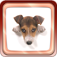 Cute Dogs apk