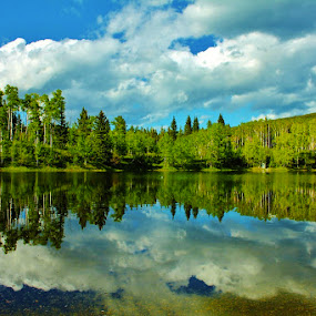 Great Canadian Forest-Sibald Lake Alberta, Canada by Laura Bentley - Landscapes Forests ( calm, water, alberta, canada, forest, lake, spring )