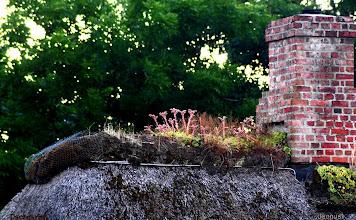 Photo: Dachgarten