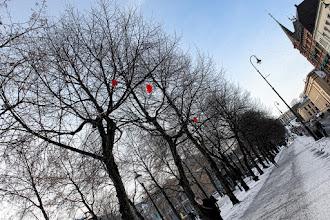 Photo: Karl Johan Street in Oslo, Norway  Good morning, I will go to university now:D  ノルウェー、首都オスロのカール・ヨハン通り まっすぐ行くと、王宮