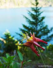 Photo: Columbine, looking northward across the lake