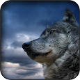 Wolf Wallpapers apk