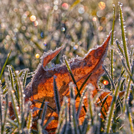 by Susan Campbell - Nature Up Close Leaves & Grasses