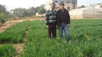 Photo: FAYA Programme Coordinator RB Khadka with agriculturalist Rajesh Singh of Krishi Gramin Vikash Kendra (KGVK), in Ranchi, India, observing SWI field [Photo provided by RB Khadka]