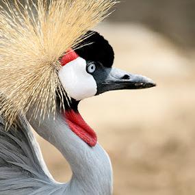 Birdie by Widianto Didiet - Animals Birds