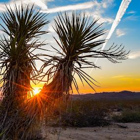 Peaking Through by Sean Cogan - Landscapes Deserts ( sunburst, desert, joshua tree, sunrise, travel )