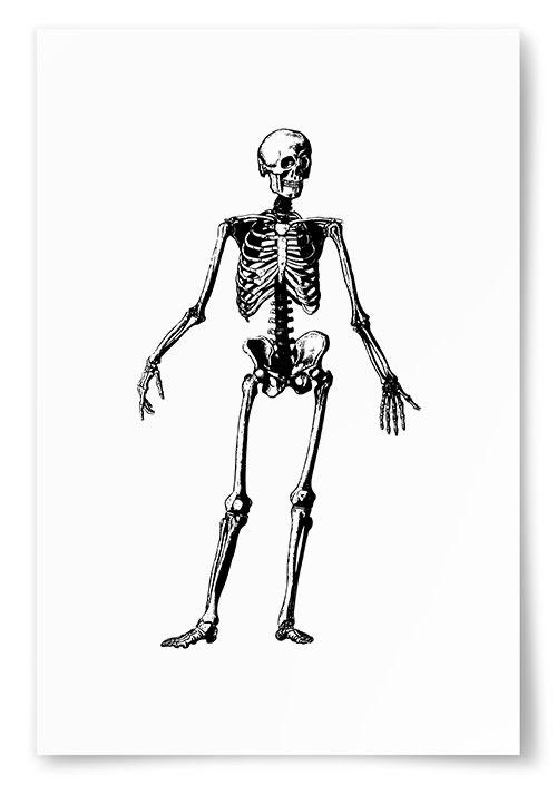 Poster Skelett Framifrån