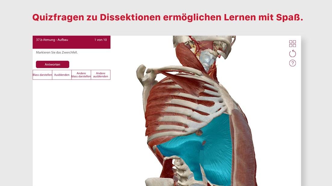 Schön Grundlagen Der Menschlichen Anatomie Und Physiologie 10 ...