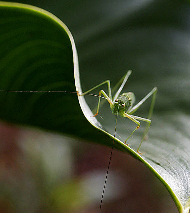 Hiphopper by Edwin   S. Loyola - Animals Insects & Spiders