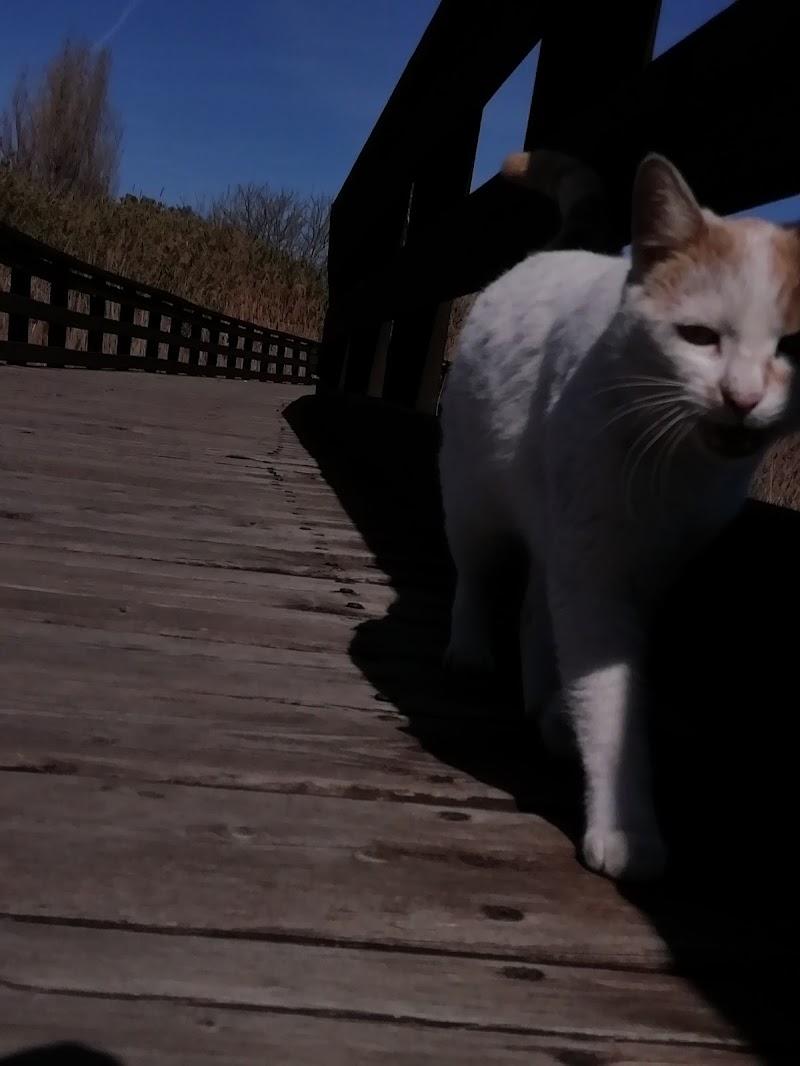 Il dominio del gatto di alessa