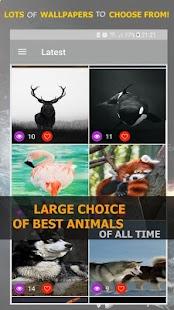 Best Animals - náhled