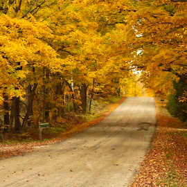 by Rs Photography - City,  Street & Park  City Parks ( fall, road, yellow, roads, colors,  )