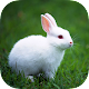 Rabbit Live Wallpaper for PC-Windows 7,8,10 and Mac