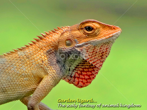 garden lizard by asif bora typography quotes sentences - Garden Lizard