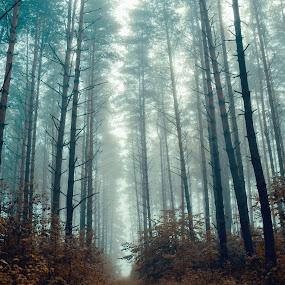 Misty morning by Hendrik Mändla - Landscapes Forests