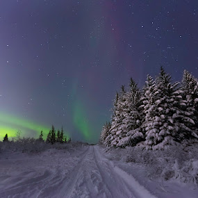 ...Winter roaud... by Ruslan Stepanov - Landscapes Forests ( iceland, sky, winter, stars, northern lights, aurora borealis, aurora, snow, trees )