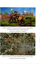 Photo: เรียนเชิญเข้าศึกษาข้อมูลการอนุรักษ์ช้างไทยที่ www.rangsinoppadol.org