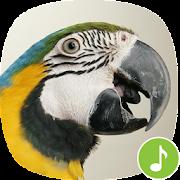 Appp.io - Macaw Bird Sounds