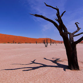 Sossusvlei by Gregoire Meyer - Landscapes Deserts ( sand, warm, desert, namib, acacia, dune, forest, landscape, heat, sossusvlei, red, sky, tree, blue, namibia )