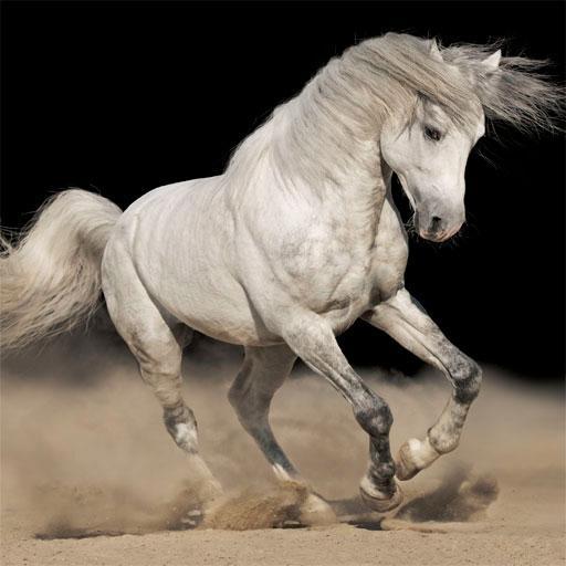 HD馬の画像 娛樂 App LOGO-APP開箱王