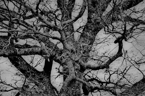 .. neri alberi stanchi... di Tiz