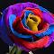 SAM_1494-Rose2018M.jpg