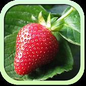 Каталог фруктов и ягод