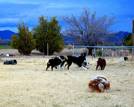 Photo: L to R: Pistol, Jaidyn, Cash, Josey, Frenchi, Rags, Fly, Ashe, and Ty's rear...