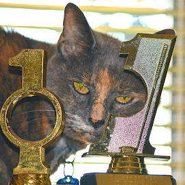 Holy Cat by Rob Bradshaw - Animals - Cats Portraits ( cats, portraits, gizmo, holy cat, holy cat, animals, tribute )