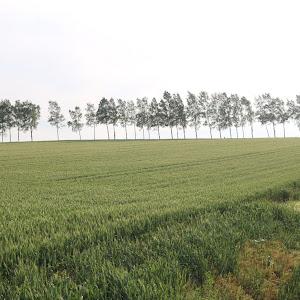 デミオ DE5FS スポルト 2008年式のカスタム事例画像 やま(DE連合 理事長)さんの2020年06月05日05:26の投稿
