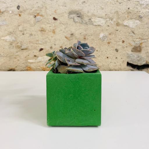 pot en béton coloré vert avec succulente