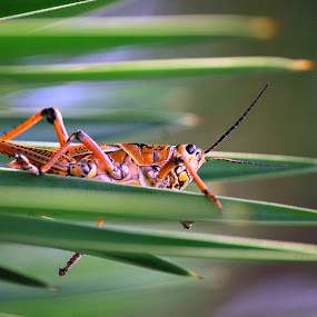 Hanging On by Colleen Rohrbaugh - Nature Up Close Leaves & Grasses ( nature, insects, grass.bugs,  )