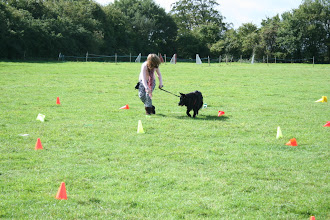 Photo: Lizzie and Lexy GSD in the Contact Slalom game