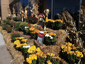 Photo: The first thing I noticed were the fall floral decorations outside. I love fall!