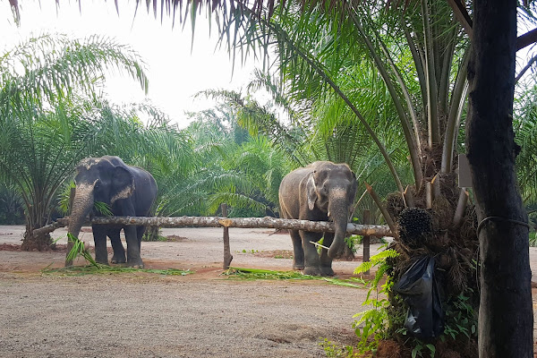 Happy elephants in a safe and sustainable environment