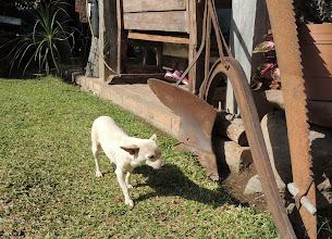 Photo: Friendly chihuahua