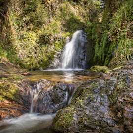 Gorton Waterfall by John McCullough - Landscapes Waterscapes ( waterfall, forest, n. ireland, gortin forest, river )