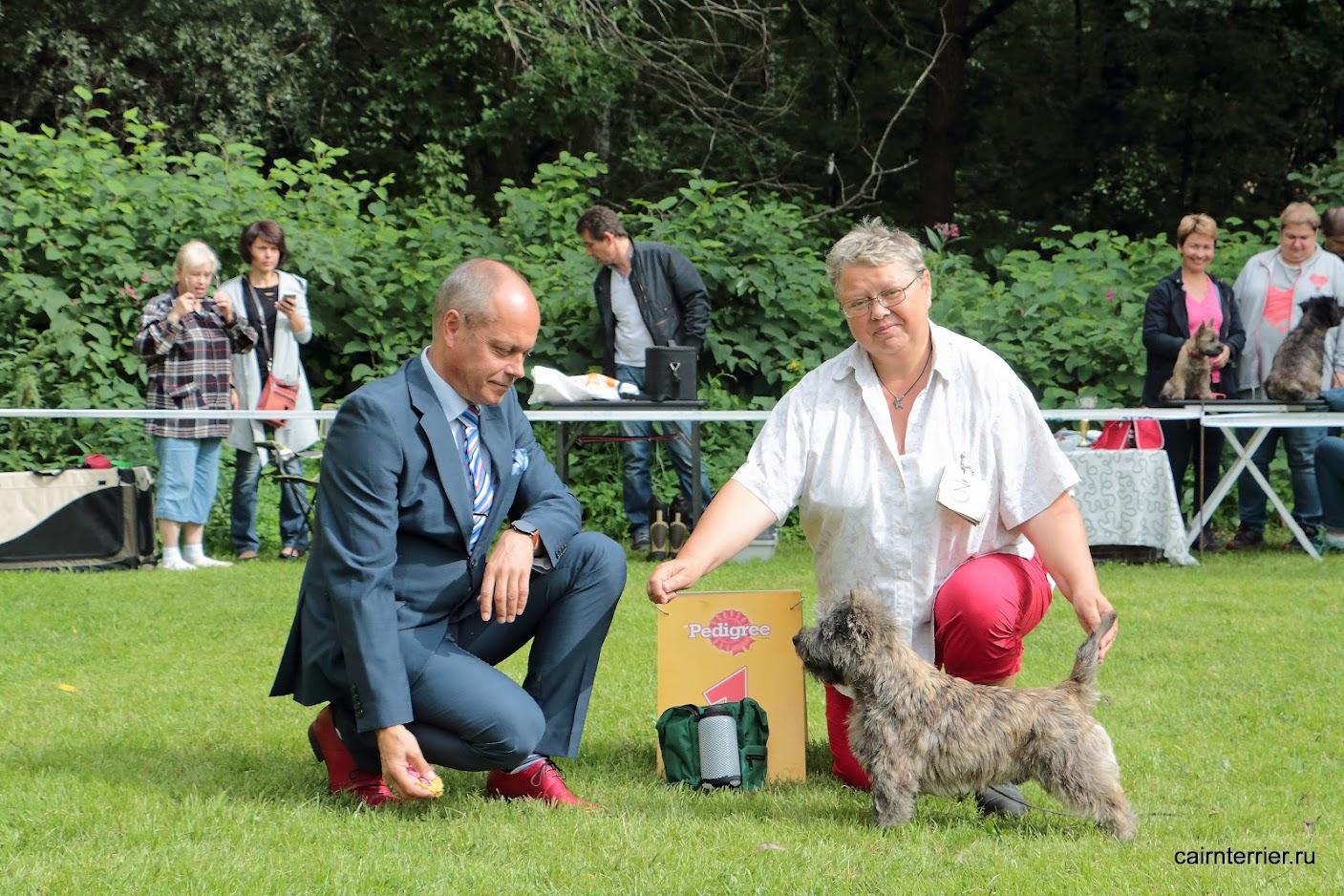 Фото керн терьера Пунша с владельцем питомника Еливс и экспертом на выставке
