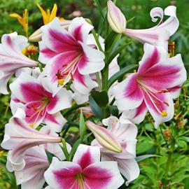 by Rita Bugiene - Flowers Flower Gardens