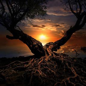 Dark V by iD 's - Landscapes Sunsets & Sunrises