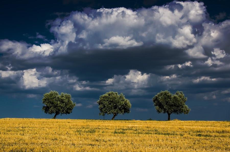 Tris by Emanuele Zallocco - Landscapes Prairies, Meadows & Fields