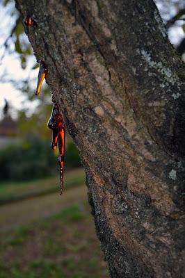 lacrime d'albero di rita18