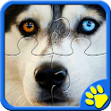 Siberian Husky Game Dog Jigsaw icon