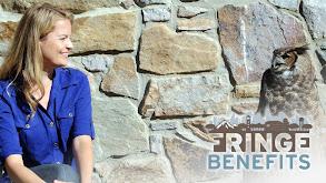 Fringe Benefits thumbnail
